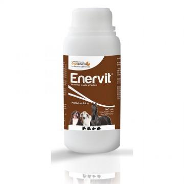 ENERVIT 240 ML