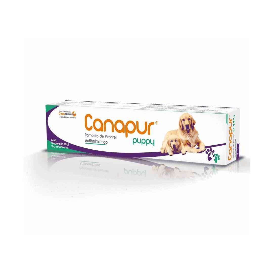 Canapur Puppy